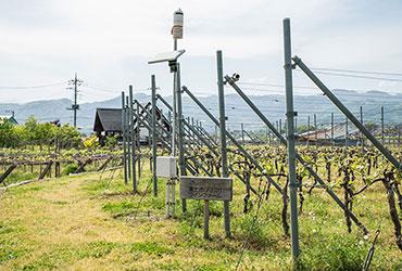 圃場へのネットワークセンサーの設置
